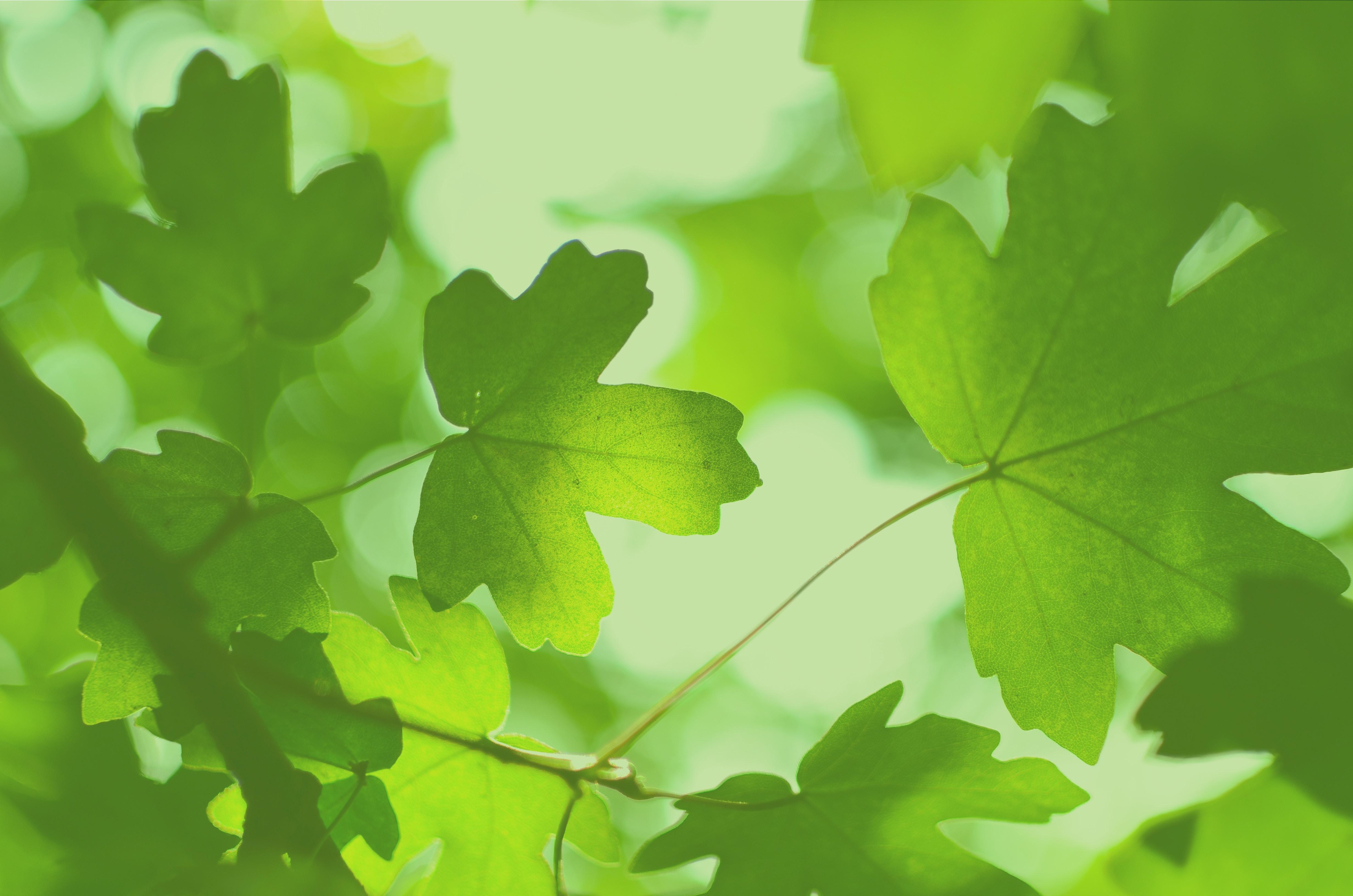 自然エネルギー100%プラットフォームウェビナー(4/7)「2050年カーボンニュートラルを実現へ  〜自然エネルギー100%実現のビジョン~」